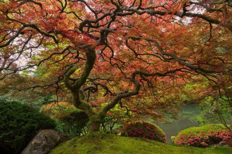 Hewan Purba yang Sudah Ada Sebelum Adanya Pohon di Bumi